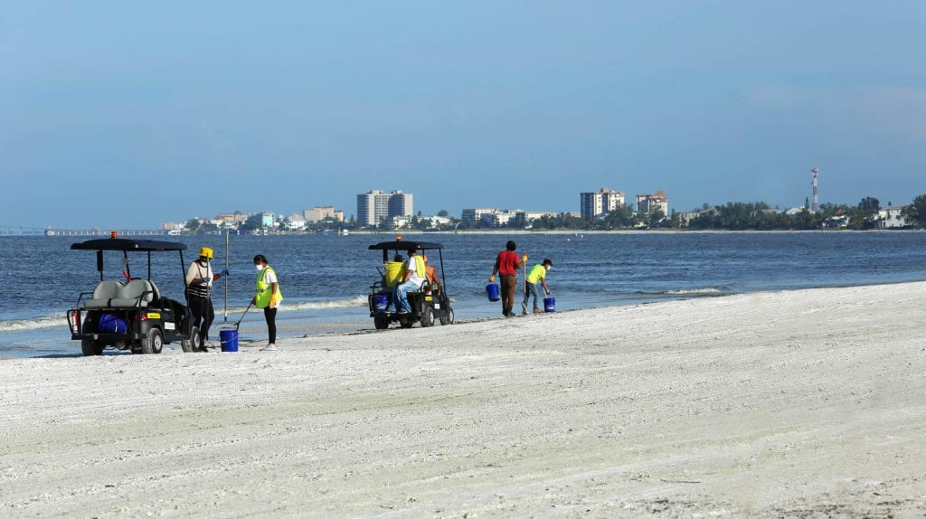 crews cleaning dead fish fort myers beach florida red tide